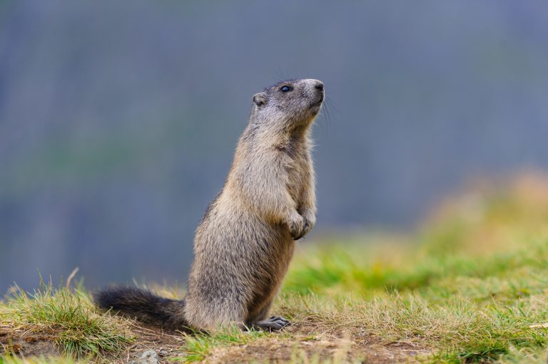 February Market Note - Punxsutawney Phil